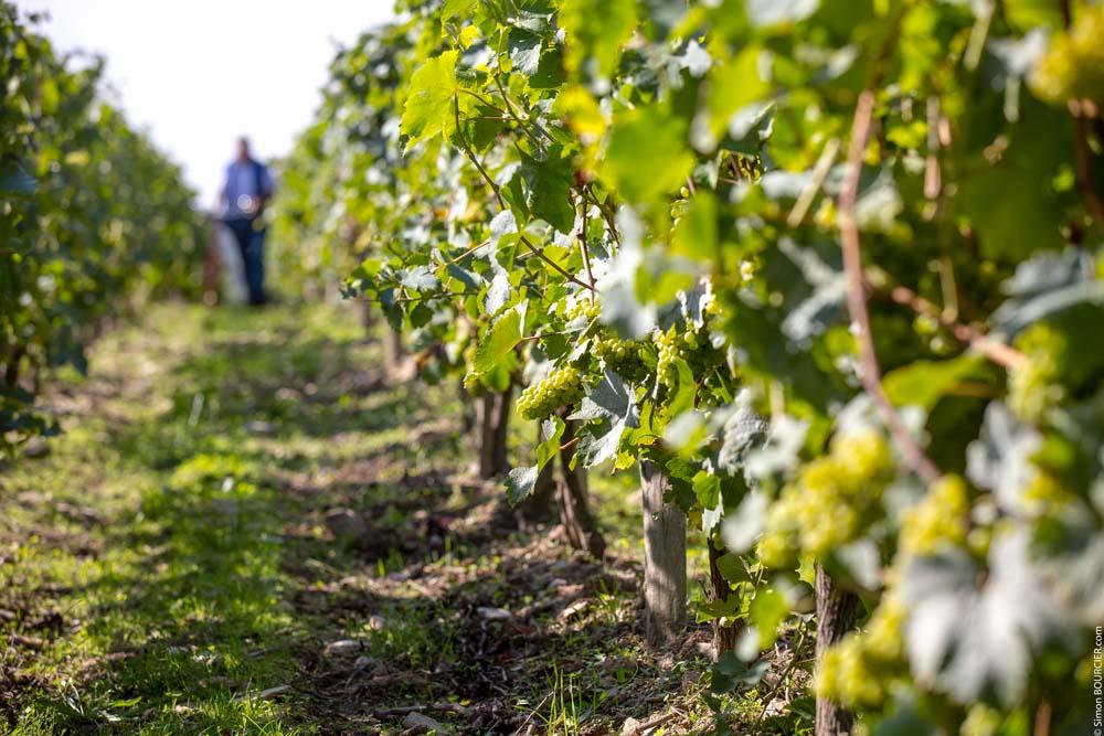 vignoble vin mareuillais fiefs vendéens