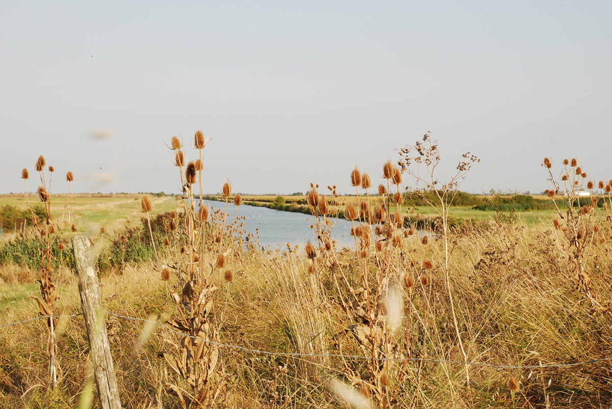 Paysage caractéristique du marais desséché