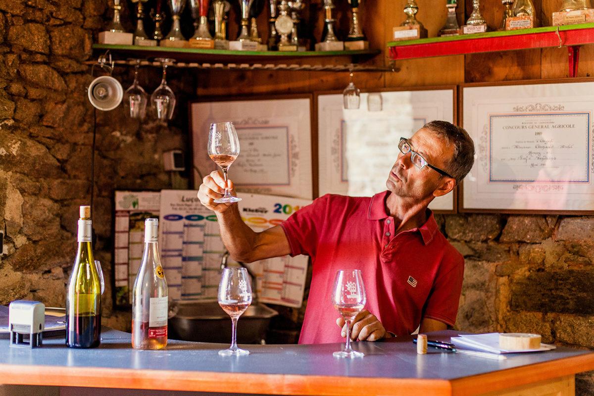 dégustation vignoble vin mareuillais fiefs vendéens la cabaudière